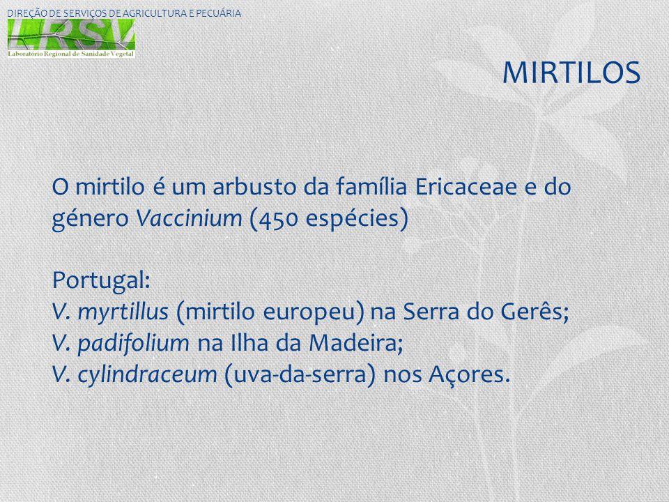 MIRTILOS DIREÇÃO DE SERVIÇOS DE AGRICULTURA E PECUÁRIA O mirtilo é um arbusto da família Ericaceae e do género Vaccinium (450 espécies) Portugal: V. m
