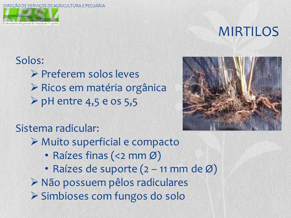 MIRTILOS DIREÇÃO DE SERVIÇOS DE AGRICULTURA E PECUÁRIA Solos:  Preferem solos leves  Ricos em matéria orgânica  pH entre 4,5 e os 5,5 Sistema radic