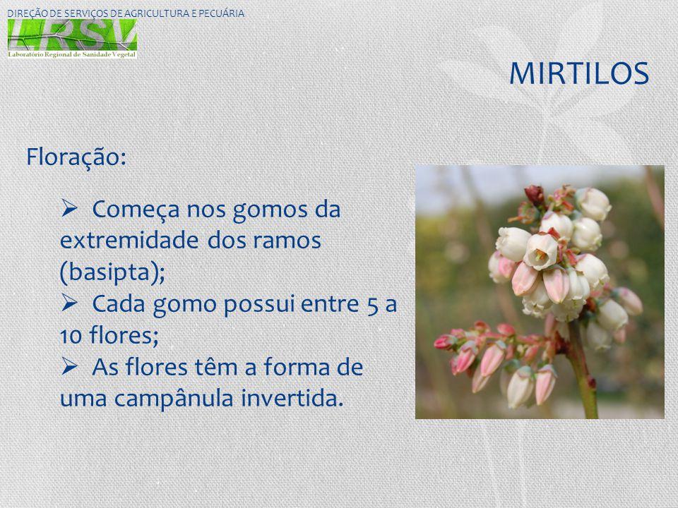 MIRTILOS DIREÇÃO DE SERVIÇOS DE AGRICULTURA E PECUÁRIA Floração:  Começa nos gomos da extremidade dos ramos (basipta);  Cada gomo possui entre 5 a 1