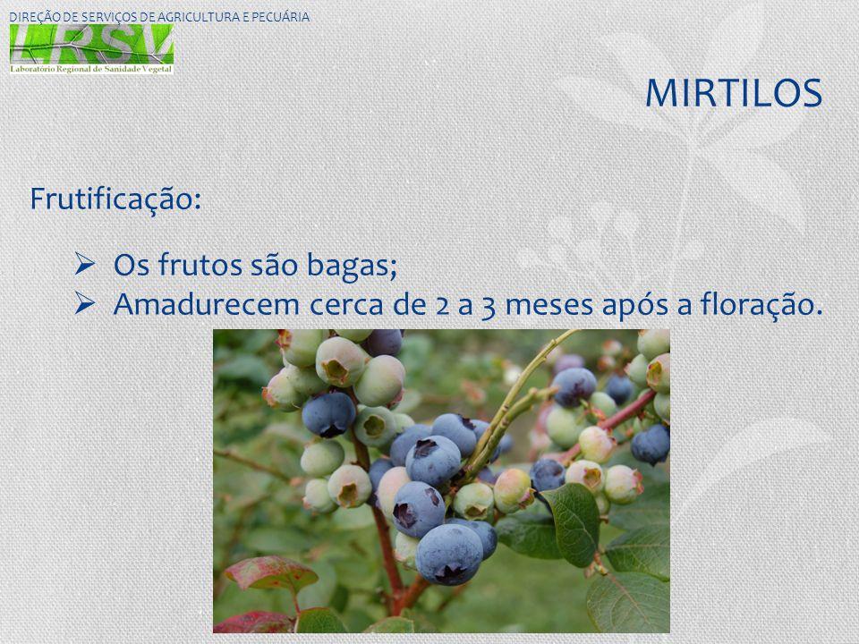 MIRTILOS DIREÇÃO DE SERVIÇOS DE AGRICULTURA E PECUÁRIA Frutificação:  Os frutos são bagas;  Amadurecem cerca de 2 a 3 meses após a floração.