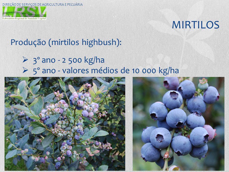MIRTILOS DIREÇÃO DE SERVIÇOS DE AGRICULTURA E PECUÁRIA Produção (mirtilos highbush):  3º ano - 2 500 kg/ha  5º ano - valores médios de 10 000 kg/ha