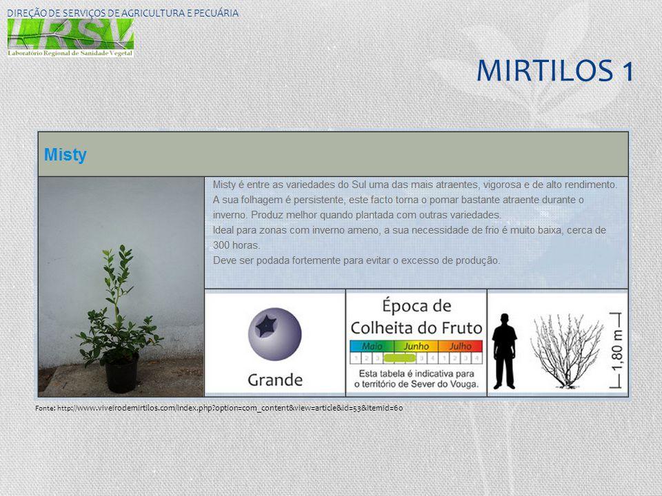 MIRTILOS 1 DIREÇÃO DE SERVIÇOS DE AGRICULTURA E PECUÁRIA Fonte: http:// www.viveirodemirtilos.com/index.php?option=com_content&view=article&id=53&Item