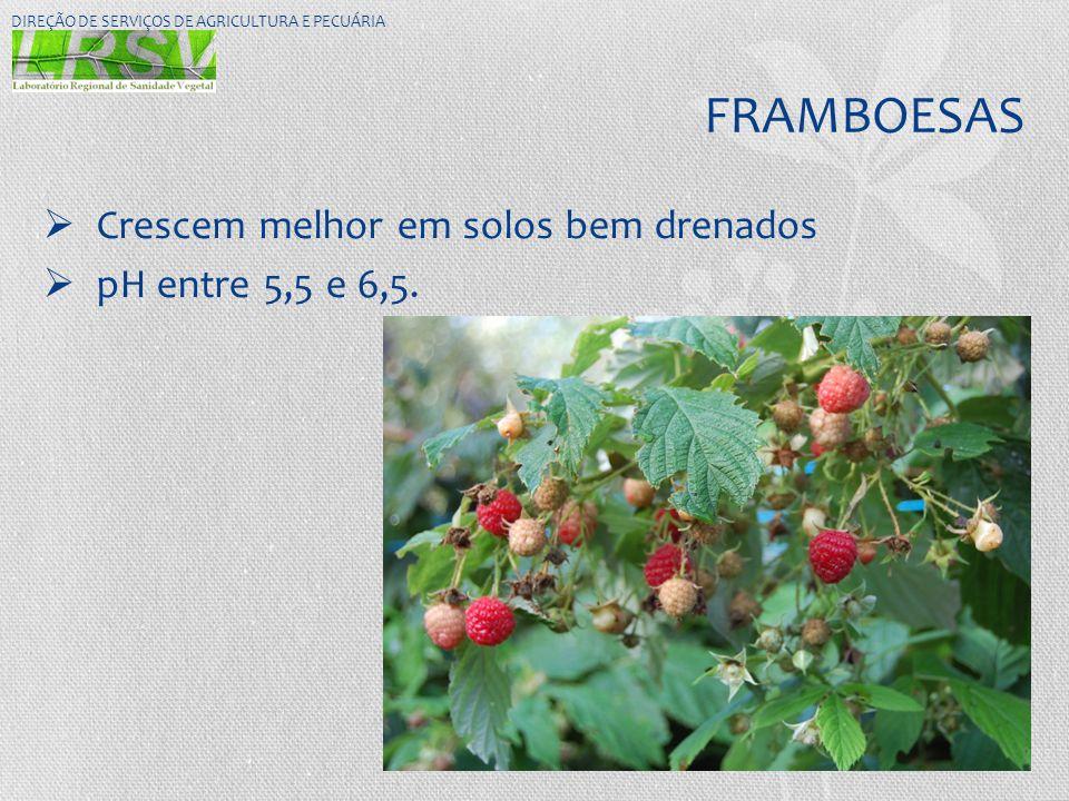 FRAMBOESAS  Crescem melhor em solos bem drenados  pH entre 5,5 e 6,5. DIREÇÃO DE SERVIÇOS DE AGRICULTURA E PECUÁRIA