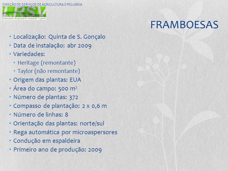 FRAMBOESAS • Localização: Quinta de S. Gonçalo • Data de instalação: abr 2009 • Variedades: • Heritage (remontante) • Taylor (não remontante) • Origem
