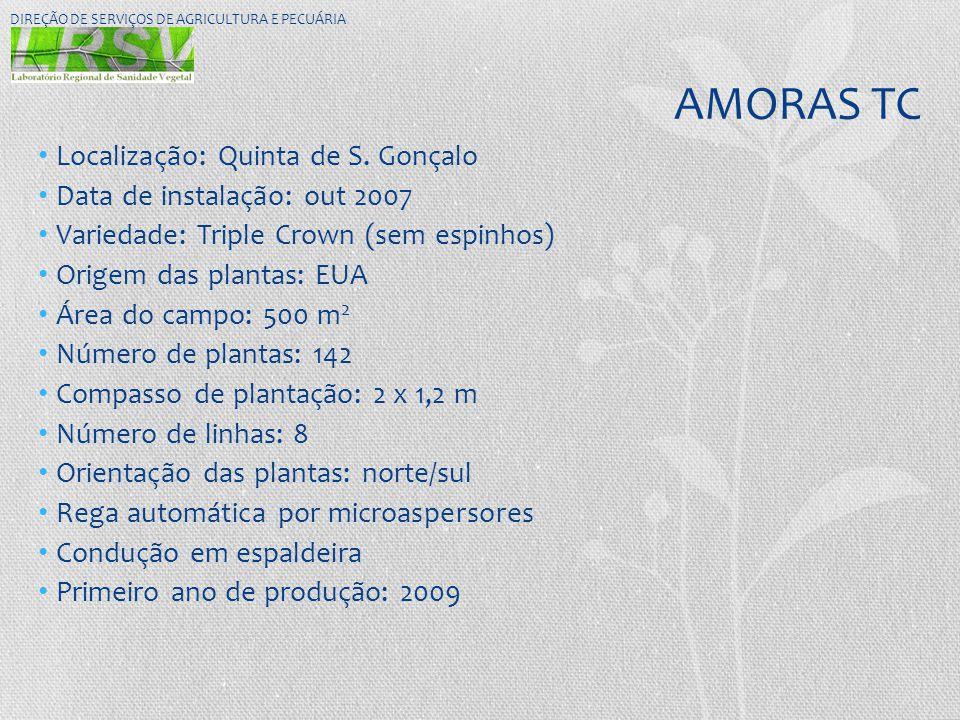 AMORAS TC • Localização: Quinta de S. Gonçalo • Data de instalação: out 2007 • Variedade: Triple Crown (sem espinhos) • Origem das plantas: EUA • Área
