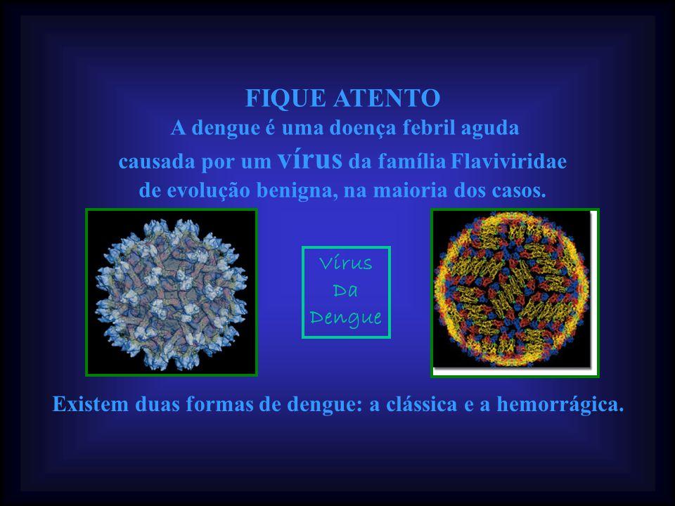 Bastaria que todos os brasileiros fossem orientados a usar o vinagre, um produto comum e sem qualquer contra-indicação , afirma Rodella.