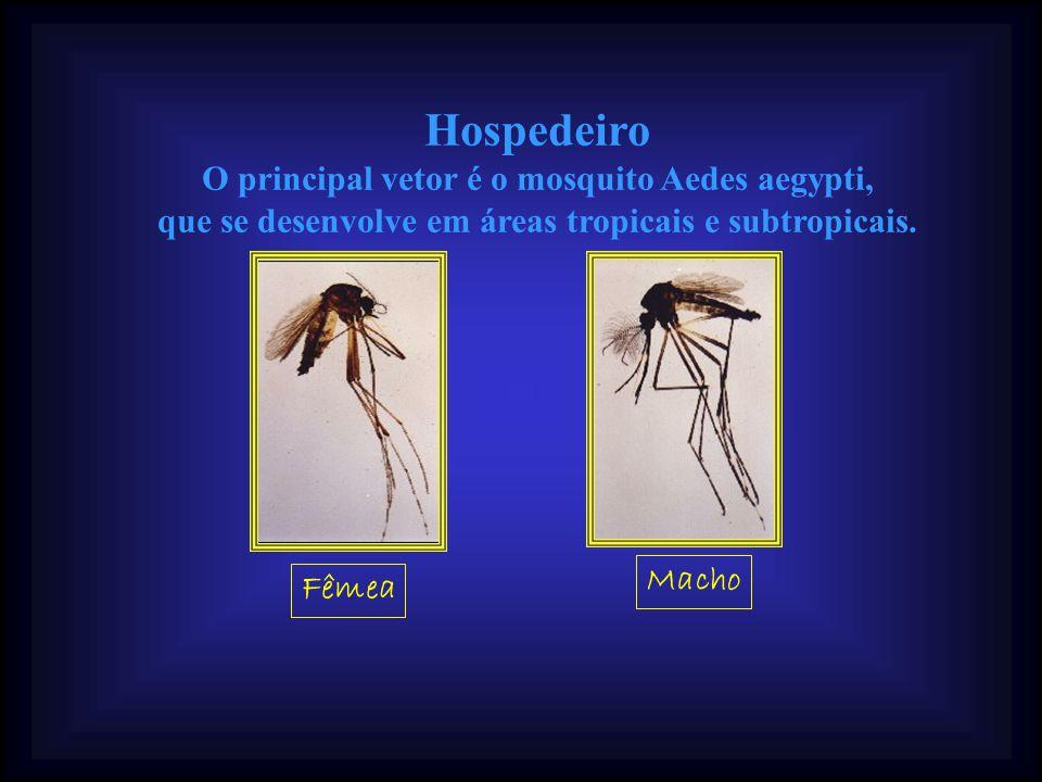 Sintomas A dengue clássica apresenta-se, geralmente, com febre, dor de cabeça, no corpo, nas articulações e por trás dos olhos, podendo afetar crianças e adultos.