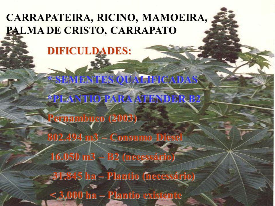 CARRAPATEIRA, RICINO, MAMOEIRA, PALMA DE CRISTO, CARRAPATO DIFICULDADES: * SEMENTES QUALIFICADAS *PLANTIO PARA ATENDER B2 Pernambuco (2003) 802.494 m3