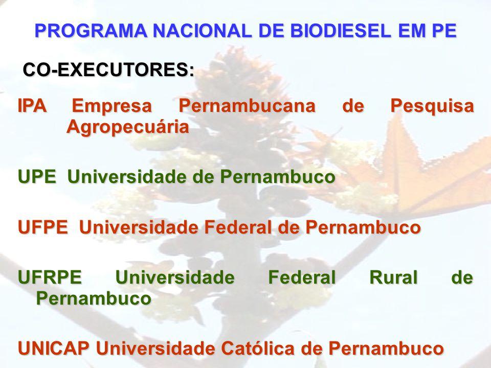 PROGRAMA NACIONAL DE BIODIESEL EM PE CO-EXECUTORES: IPA Empresa Pernambucana de Pesquisa Agropecuária UPE Universidade de Pernambuco UFPE Universidade