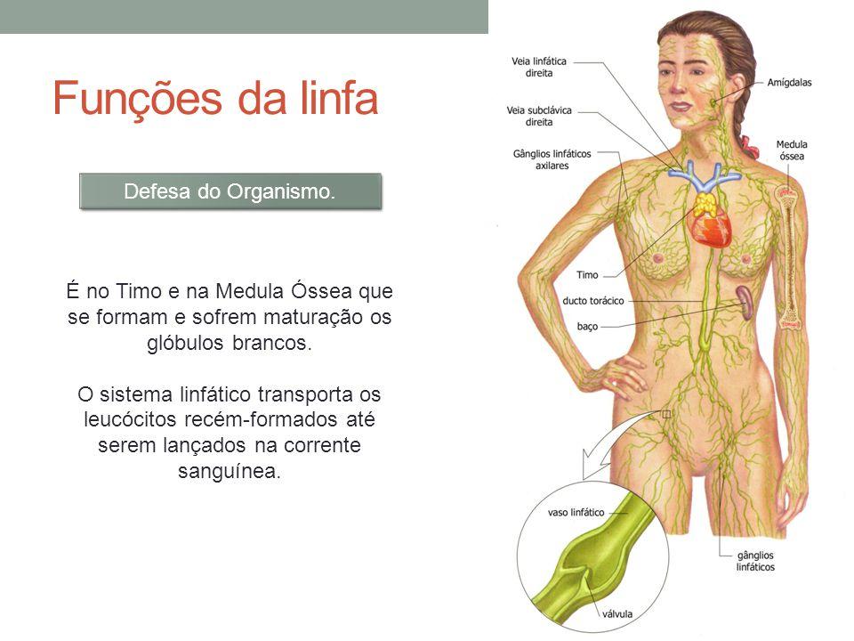 É no Timo e na Medula Óssea que se formam e sofrem maturação os glóbulos brancos.