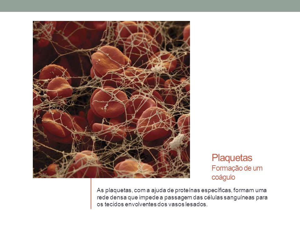 Plaquetas Formação de um coágulo As plaquetas, com a ajuda de proteínas específicas, formam uma rede densa que impede a passagem das células sanguíneas para os tecidos envolventes dos vasos lesados.