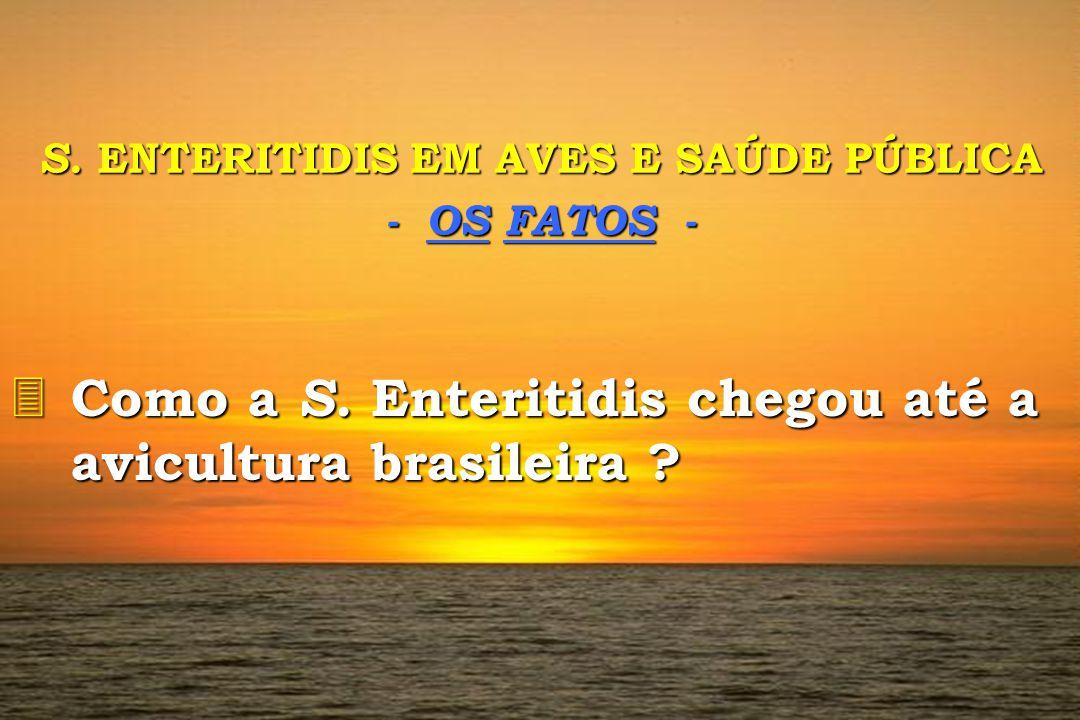 S. ENTERITIDIS EM AVES E SAÚDE PÚBLICA - OS FATOS - 3 Como 3 Como a S. S. Enteritidis chegou até a avicultura brasileira ?