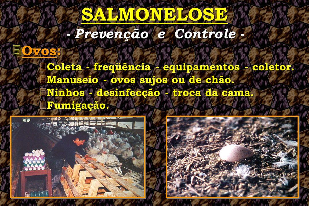 SALMONELOSE 3 Ovos: 3 Coleta 3 Coleta - freqüência - equipamentos - coletor. 3 Manuseio 3 Manuseio - ovos sujos ou de chão. 3 Ninhos 3 Ninhos - desinf
