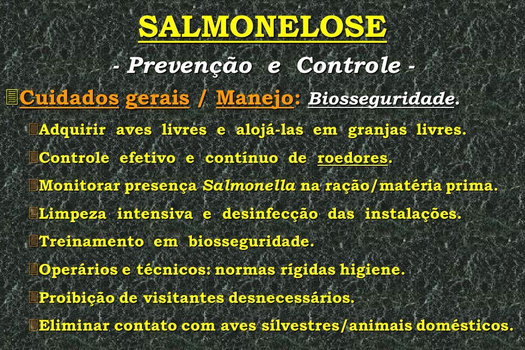 SALMONELOSE 3 Cuidados gerais / Manejo: Biosseguridade. 3 Adquirir aves livres e alojá-las em granjas livres. 3 Controle efetivo e contínuo de roedore