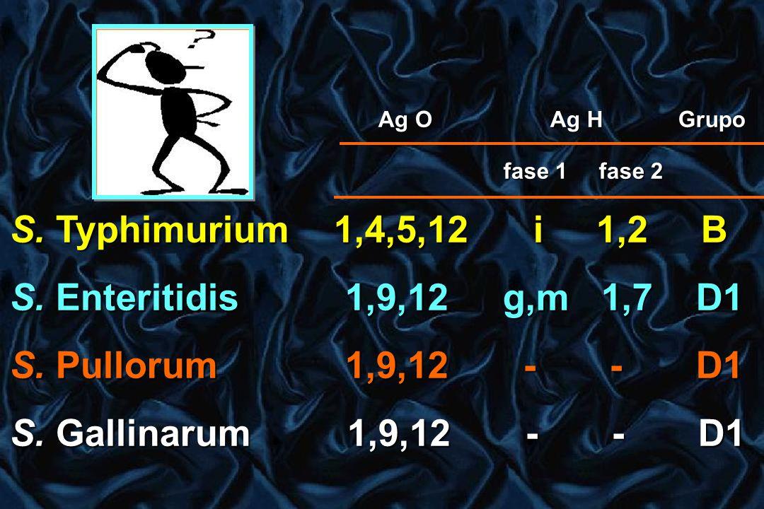 Ag O Ag H Grupo Ag O Ag H Grupo fase 1 fase 2 fase 1 fase 2 S. Typhimurium 1,4,5,12 i 1,2 B S. Enteritidis 1,9,12 g,m 1,7 D1 S. Pullorum 1,9,12 - - D1