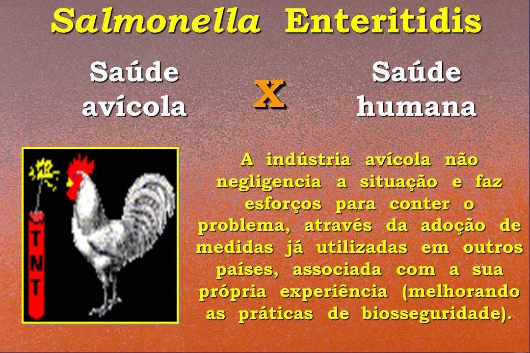 Salmonella Enteritidis Saúde avícola Saúde humana XX A indústria avícola não negligencia a situação e faz esforços para conter o problema, através da