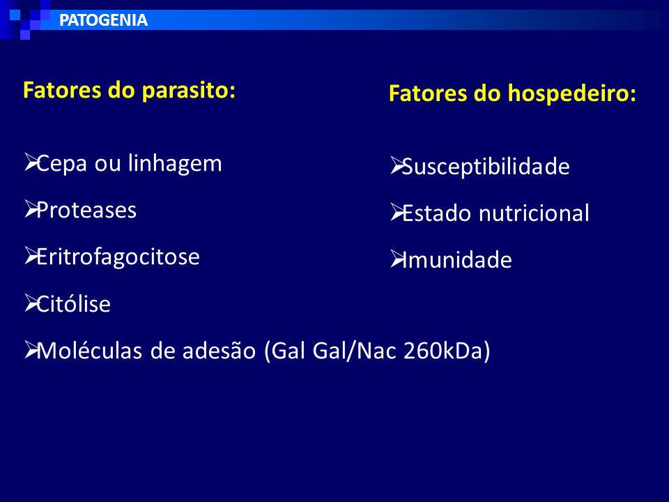 Fatores do hospedeiro:  Susceptibilidade  Estado nutricional  Imunidade Fatores do parasito:  Cepa ou linhagem  Proteases  Eritrofagocitose  Citólise  Moléculas de adesão (Gal Gal/Nac 260kDa)