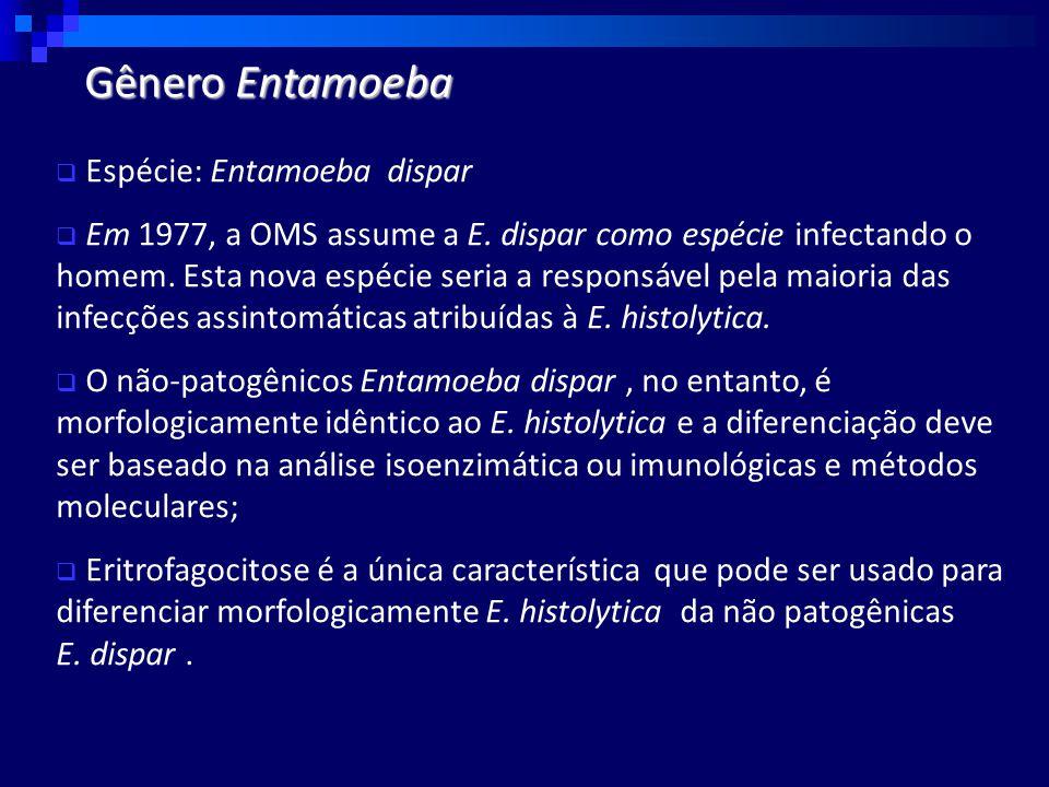  Espécie: Entamoeba dispar  Em 1977, a OMS assume a E.