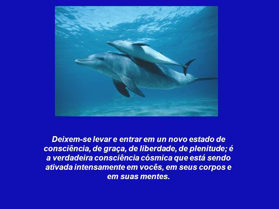 Recebemos dos nossos irmãos delfins, um completo sistema de ativação que atuará de forma integral em todos e cada um de nossos corpos, tanto físico co