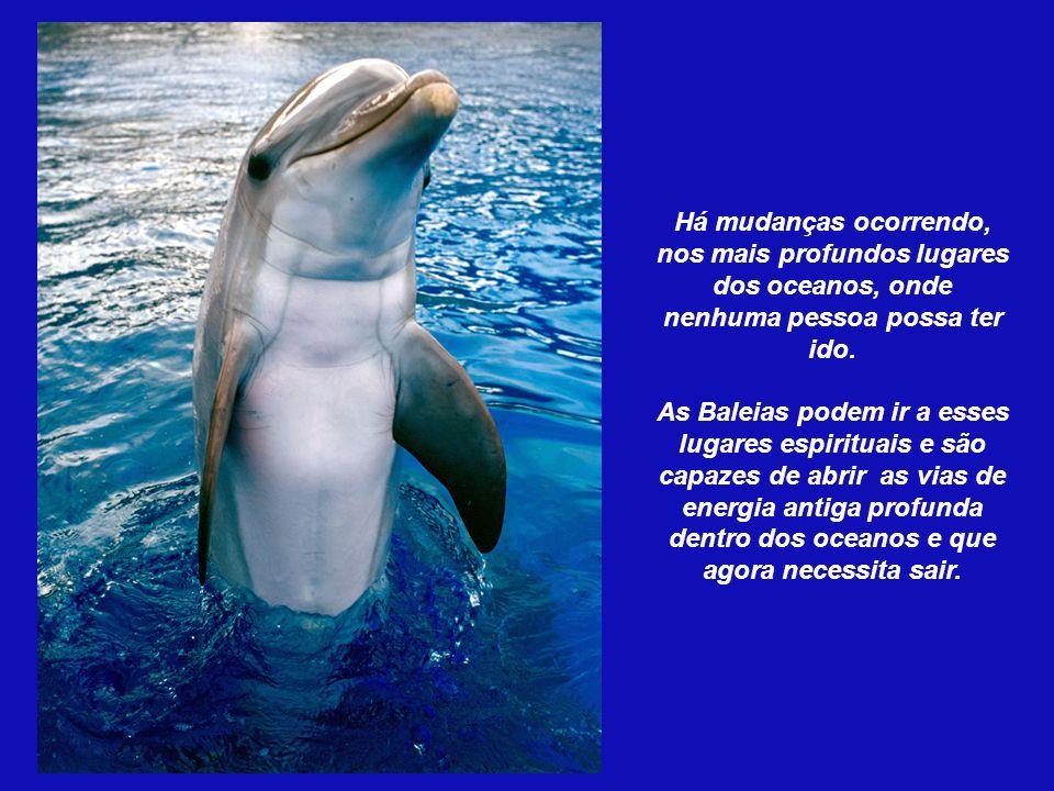 A mensagem dos delfins é o AMOR UNIVERSAL. O que nos ensinam é simplesmente SER: a alegria de jogar pelo jogo e não pelo premio, o AMOR pelo próprio a