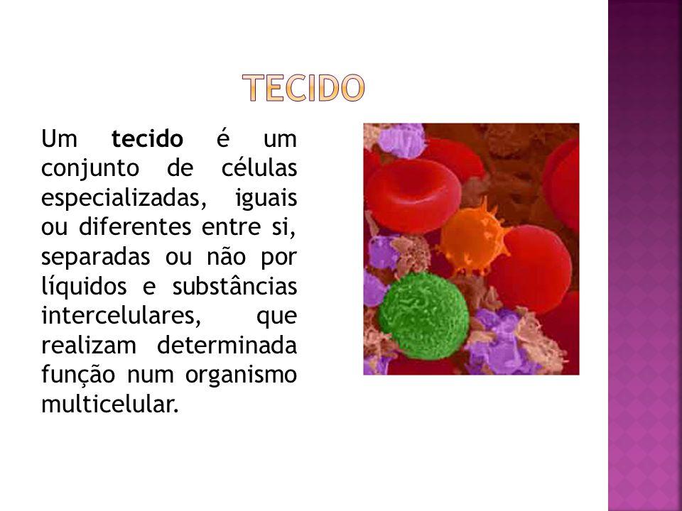 Um tecido é um conjunto de células especializadas, iguais ou diferentes entre si, separadas ou não por líquidos e substâncias intercelulares, que realizam determinada função num organismo multicelular.