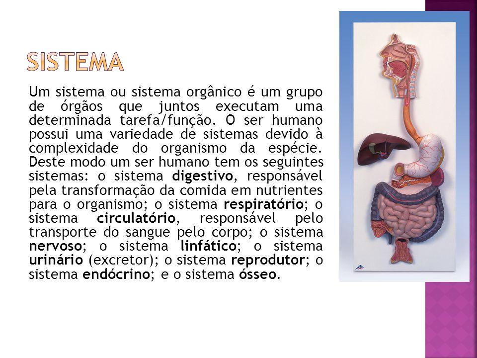 Um sistema ou sistema orgânico é um grupo de órgãos que juntos executam uma determinada tarefa/função.