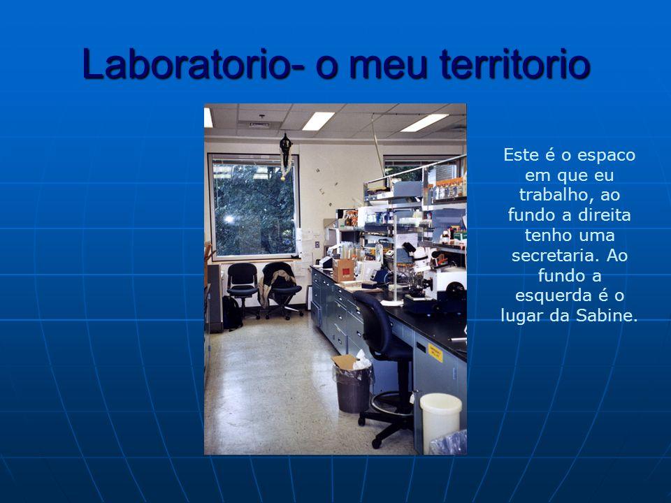 Laboratorio- o meu territorio Este é o espaco em que eu trabalho, ao fundo a direita tenho uma secretaria.