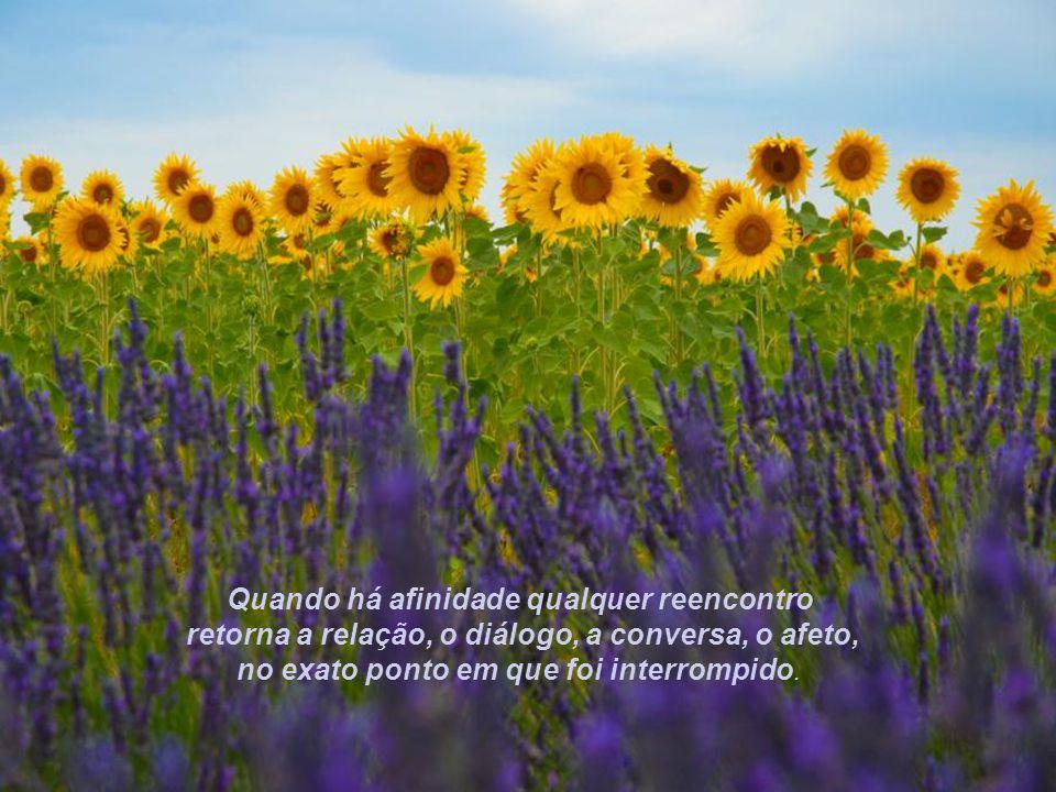 Quando há afinidade qualquer reencontro retorna a relação, o diálogo, a conversa, o afeto, no exato ponto em que foi interrompido.