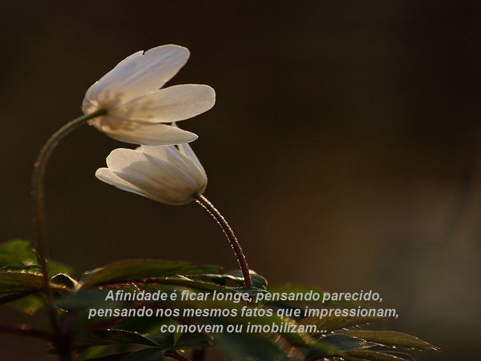 Afinidade é ficar longe, pensando parecido, pensando nos mesmos fatos que impressionam, comovem ou imobilizam...