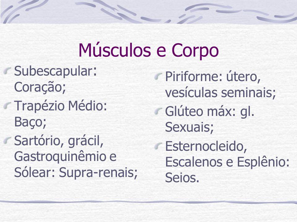 Músculos e Corpo Subescapular : Coração; Trapézio Médio: Baço; Sartório, grácil, Gastroquinêmio e Sólear: Supra-renais; Piriforme: útero, vesículas se