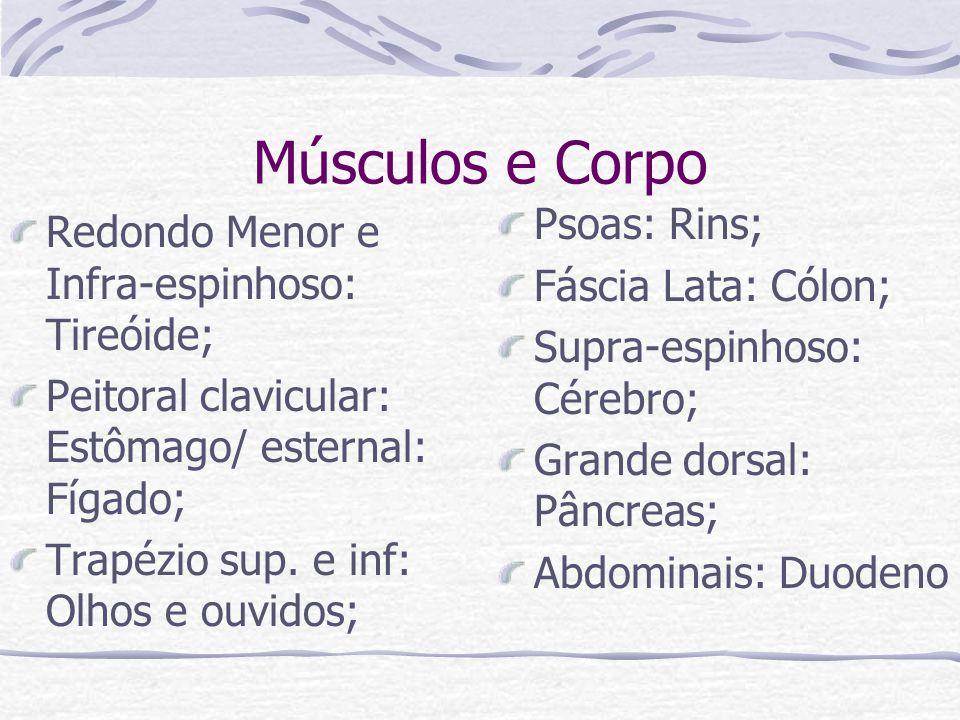 Músculos e Corpo Redondo Menor e Infra-espinhoso: Tireóide; Peitoral clavicular: Estômago/ esternal: Fígado; Trapézio sup. e inf: Olhos e ouvidos; Pso