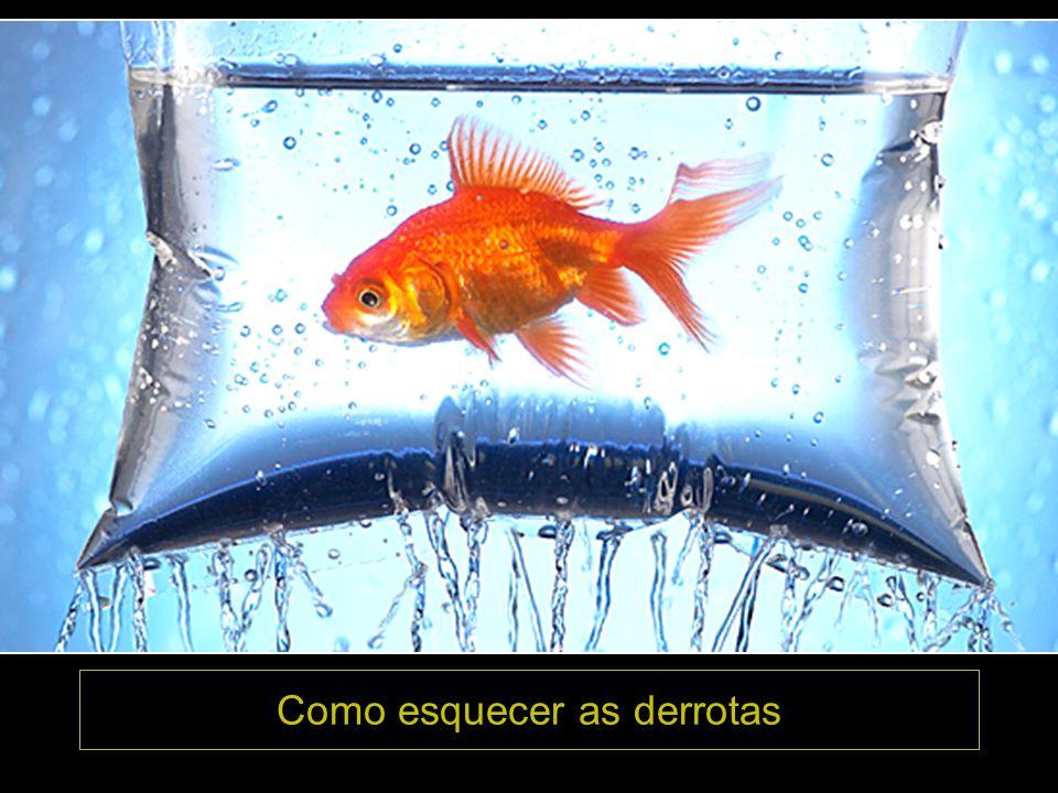 FELIZ DIA DO AMIGO 2007 Abraços Ir. Hermes José