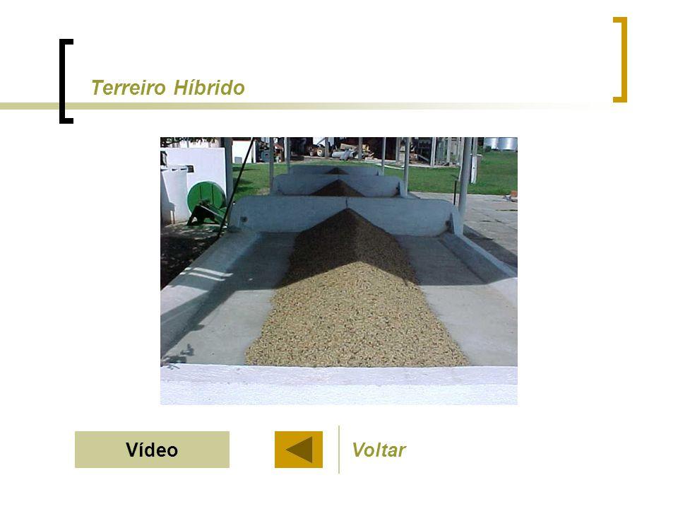Terreiro Híbrido VídeoVoltar