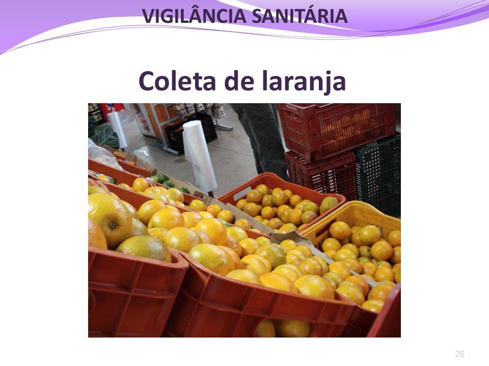 Coleta de laranja 26 VIGILÂNCIA SANITÁRIA
