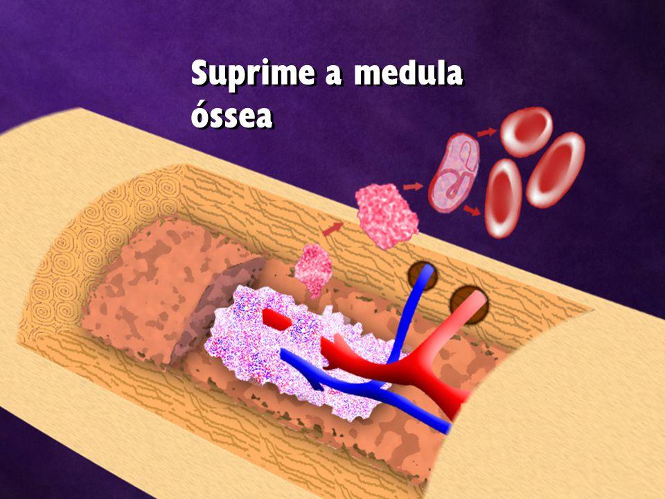 Suprime a medula óssea