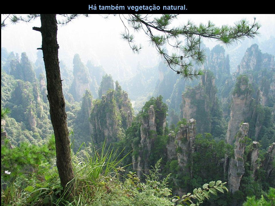 Há também vegetação natural.