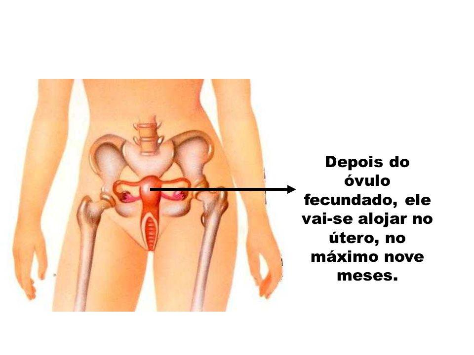 Dois meses após a fecundação, as partes principais do feto já estão formadas.