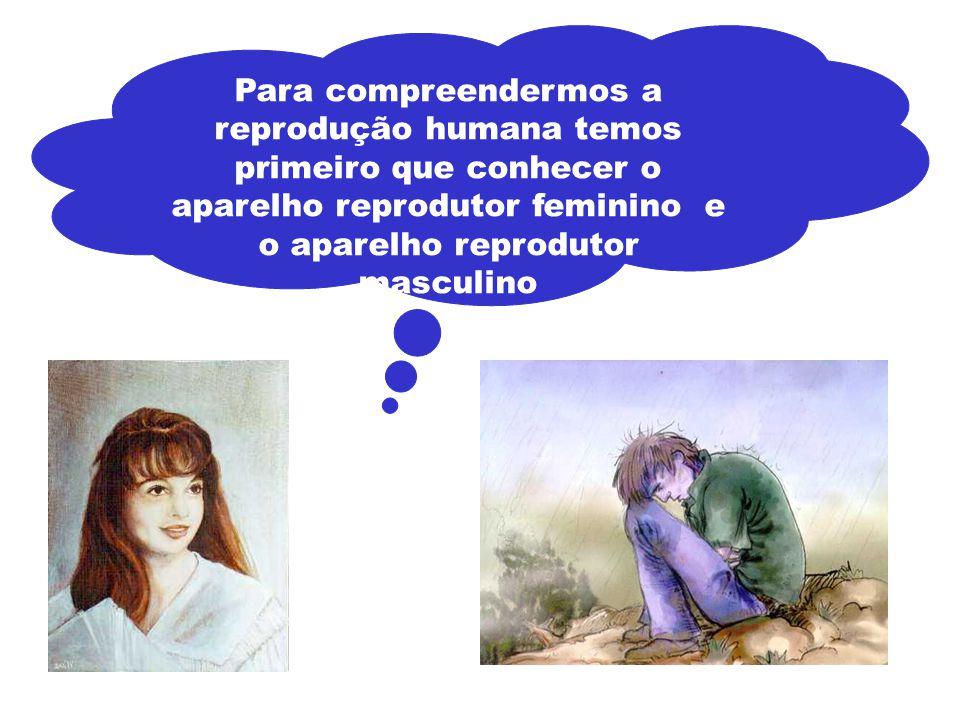 Os ovários são dois órgãos que produzem óvulos. Aparelho Reprodutor Feminino