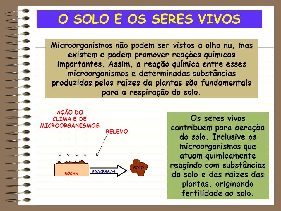 O SOLO E OS SERES VIVOS Microorganismos não podem ser vistos a olho nu, mas existem e podem promover reações químicas importantes. Assim, a reação quí