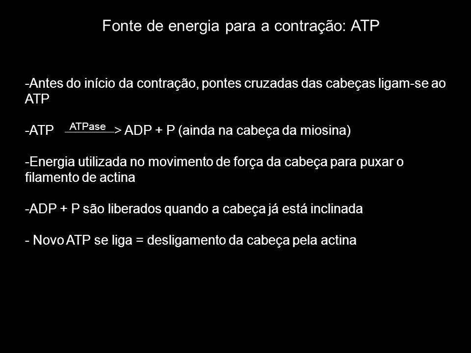 -Antes do início da contração, pontes cruzadas das cabeças ligam-se ao ATP -ATP ATPase > ADP + P (ainda na cabeça da miosina) -Energia utilizada no movimento de força da cabeça para puxar o filamento de actina -ADP + P são liberados quando a cabeça já está inclinada - Novo ATP se liga = desligamento da cabeça pela actina Fonte de energia para a contração: ATP