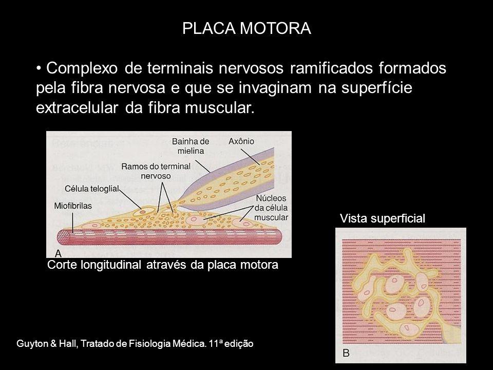 PLACA MOTORA • Complexo de terminais nervosos ramificados formados pela fibra nervosa e que se invaginam na superfície extracelular da fibra muscular.