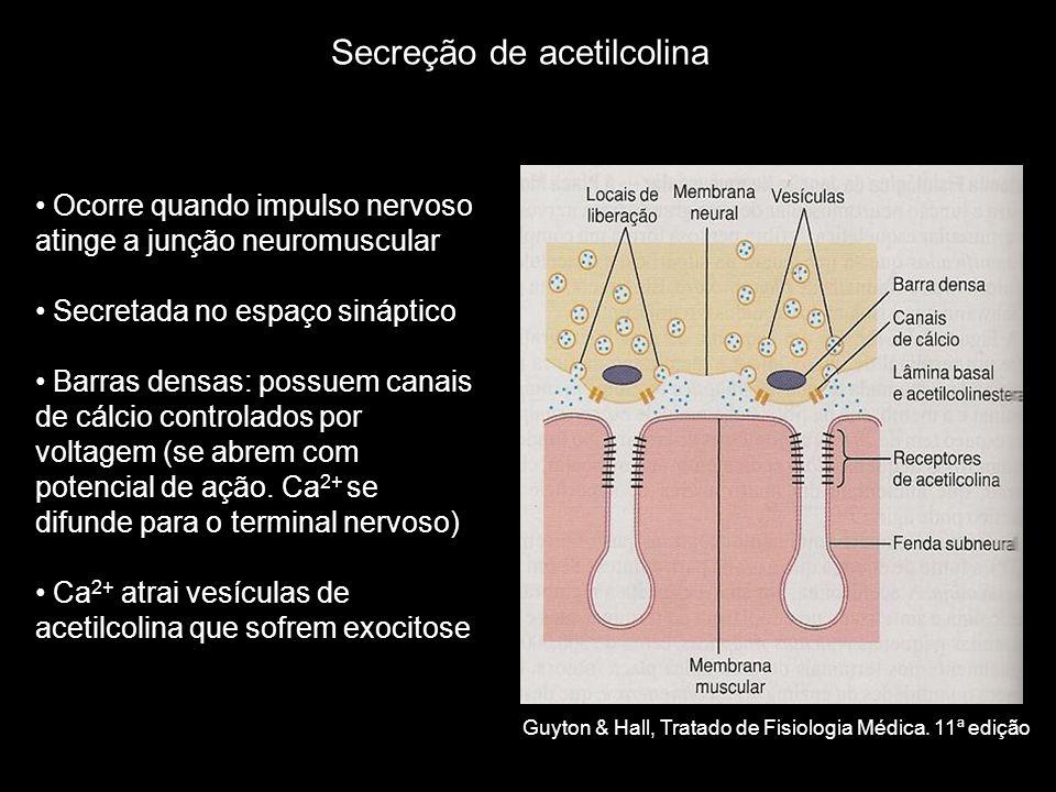 • Ocorre quando impulso nervoso atinge a junção neuromuscular • Secretada no espaço sináptico • Barras densas: possuem canais de cálcio controlados por voltagem (se abrem com potencial de ação.