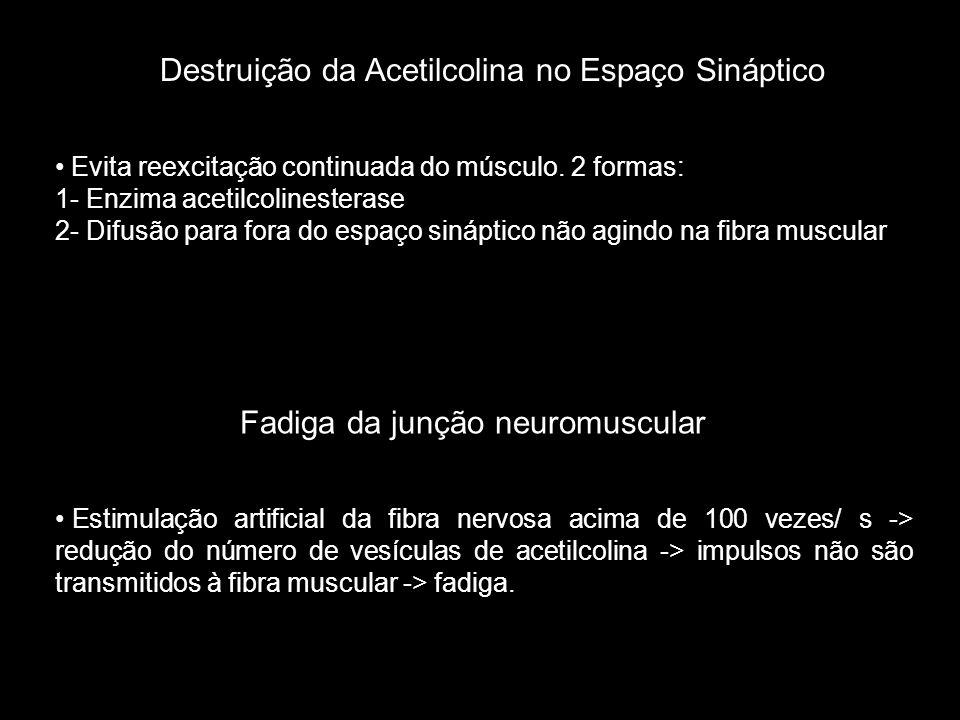 • Evita reexcitação continuada do músculo. 2 formas: 1- Enzima acetilcolinesterase 2- Difusão para fora do espaço sináptico não agindo na fibra muscul