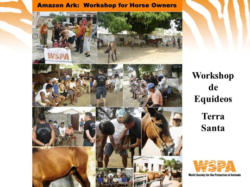 Workshop de Equideos Terra Santa