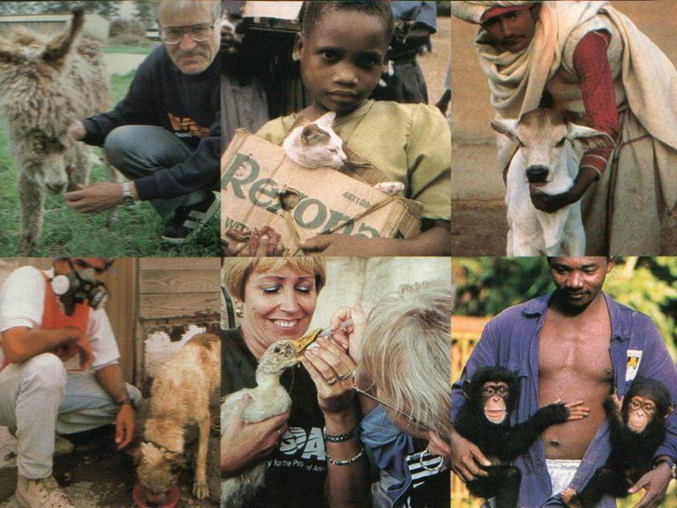 World Society for the Protection of Animals Sociedade Mundial de Proteção Animal WSPA-Brasil •1991 – São Paulo •1997 – Rio de Janeiro •Golfinho Flipper – Laguna, SC - 1993 •Clínica PAATA - Porto Alegre, RS •I Conferência Pet Respect – São Paulo, SP - 1995 Bem-Estar Animal
