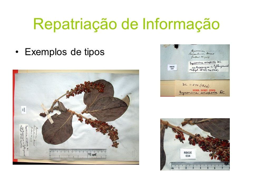 Repatriação de Informação •Exemplos de tipos