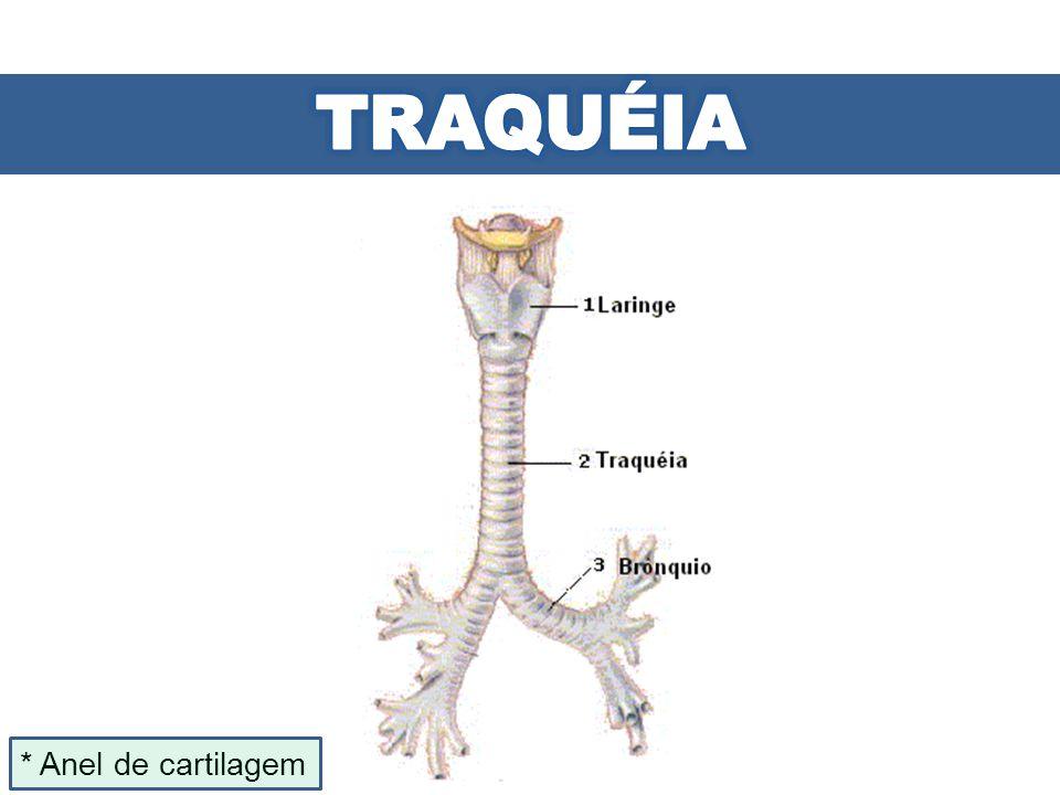 * Anel de cartilagem