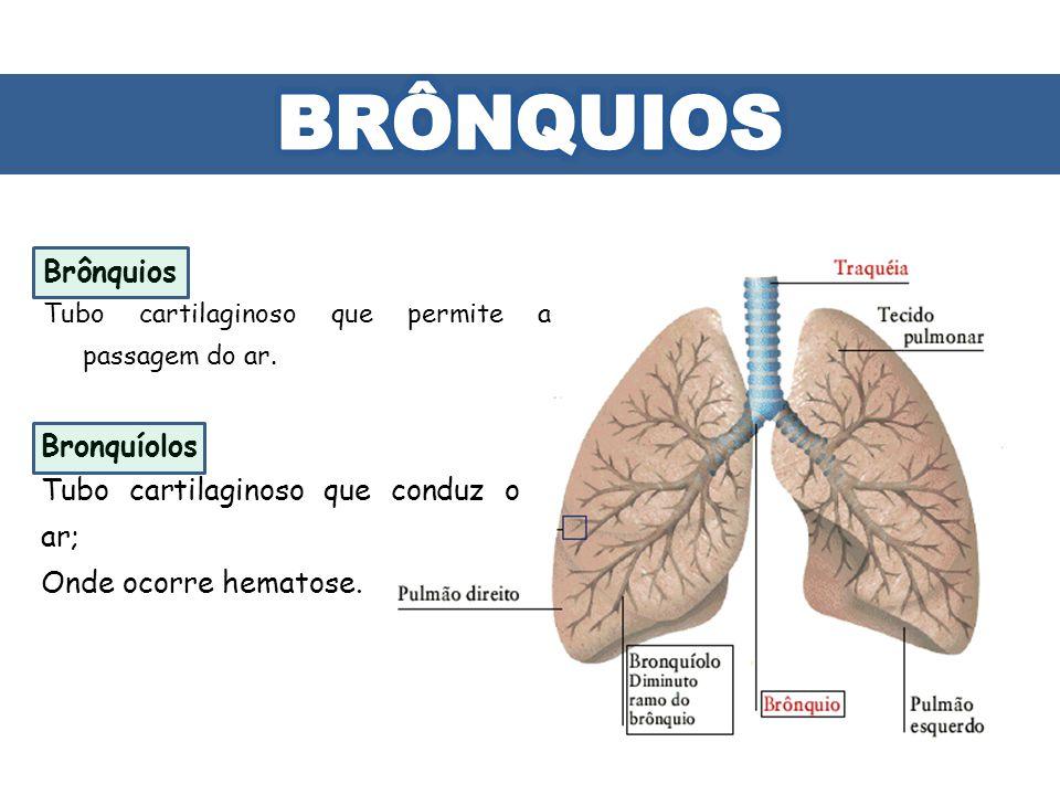 Brônquios Tubo cartilaginoso que permite a passagem do ar. Bronquíolos Tubo cartilaginoso que conduz o ar; Onde ocorre hematose.