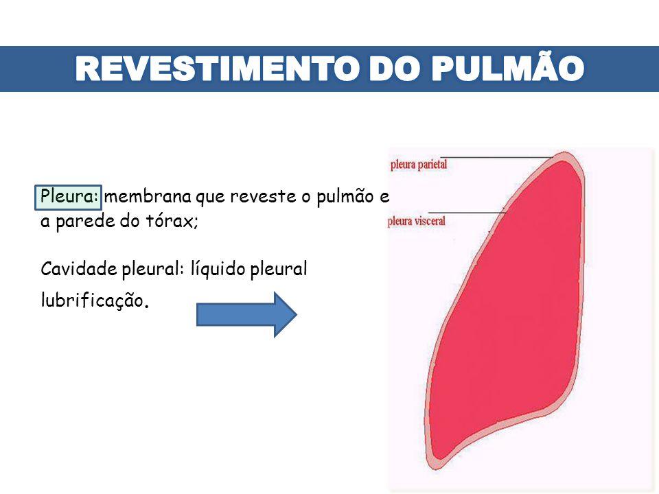 Pleura: membrana que reveste o pulmão e a parede do tórax; Cavidade pleural: líquido pleural lubrificação.
