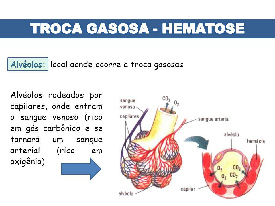 Alvéolos: local aonde ocorre a troca gasosas Alvéolos rodeados por capilares, onde entram o sangue venoso (rico em gás carbônico e se tornará um sangu